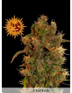 Barney´s Farm - 8 Ball kush