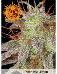 Barney´s farm - Amensia Lemon
