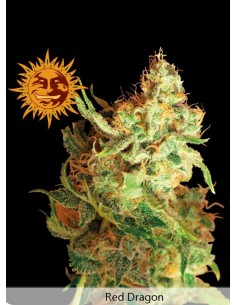 Barney´s farm - Red Dragon