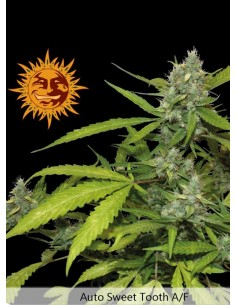 Barney´s Farm - Auto Sweet Tooth