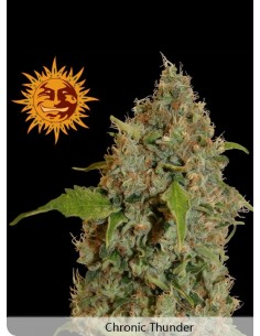 Barney´s Farm - Chronic Thunder