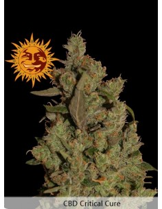 Barney´s Farm - Critical Cure