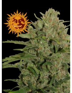Barney´s Farm - Triple Cheese