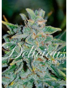 Delicious - Auto Northernlight Blue
