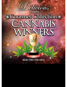 Delicious Seeds - Cannabis Winners 1 (9 graines)