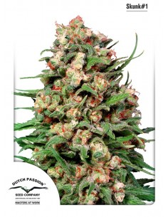 Dutch Passion - Skunk 1