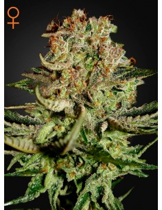 Green House - Super Bud
