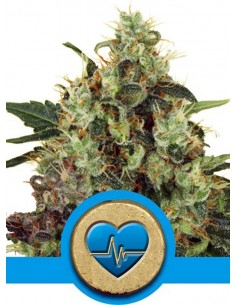Royal Queen Seeds- Medical Mass CBD