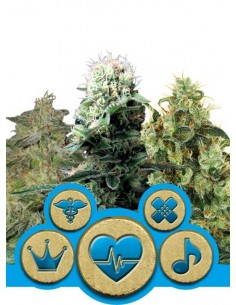 Royal Queen Seeds - Medical Mix