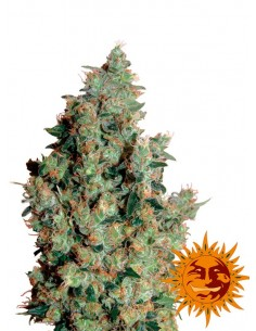Barney´s Farm -Tangerine Dream