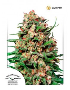 Dutch Passion - Skunk 1 10 Semillas Regulares