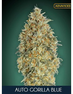 Advanced Seeds_ Auto Gorilla Blue