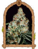 Exotic Seeds- Zkittalicious