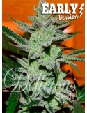 Delicious Seeds- Unknown Kush Early Version