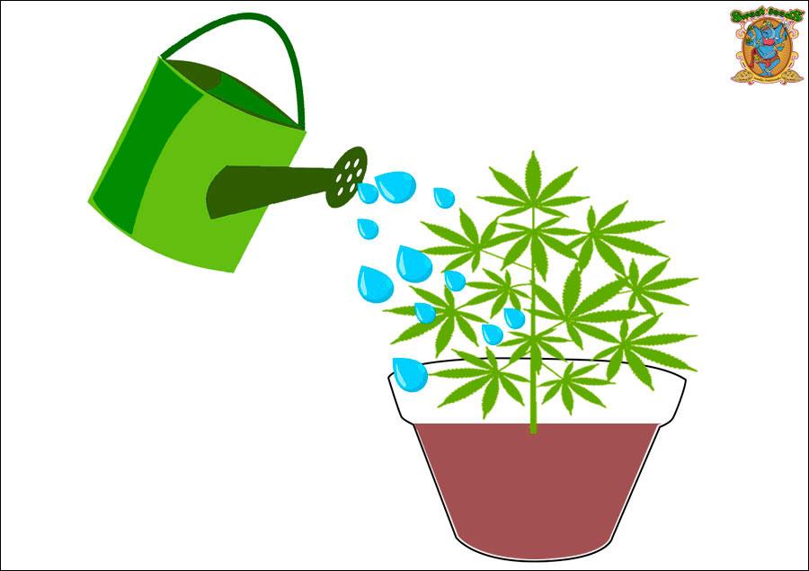 Consejos para cuidar tu cultivo de marihuana si viajas | Sweet Seeds®