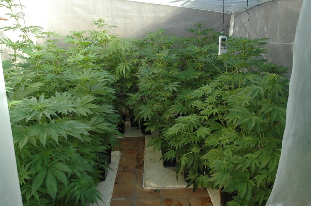 Cultivar Marihuana En El Exterior