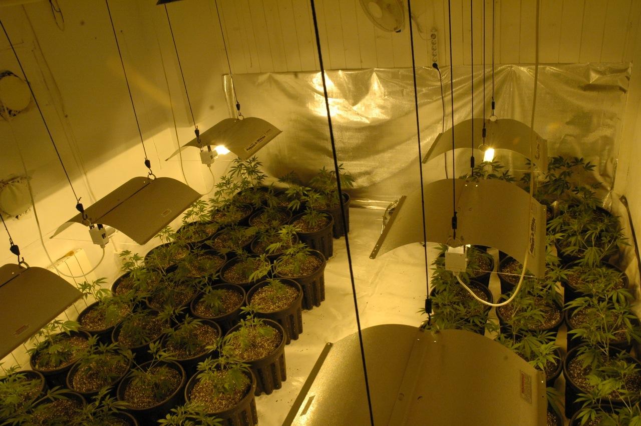 Cultivar marihuana en el interior manual de cultivo for Produccion marihuana interior