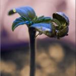 7-planta-con-cascaron_zps3d9188cc