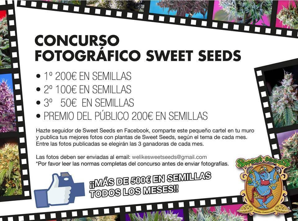 conrcurso sweet seeds