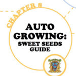 (English) Auto Growing: Sweet Seeds® Guide