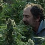 cannabismedicinal