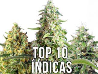 top variedades indica