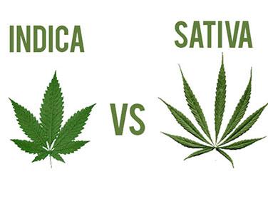 diferencia entre indica y sativa
