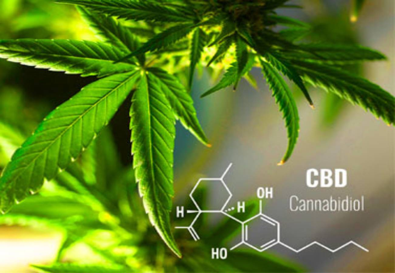 que son cannabinoides