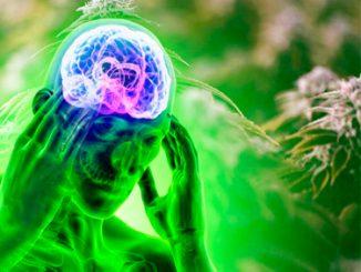 cannabis migraña