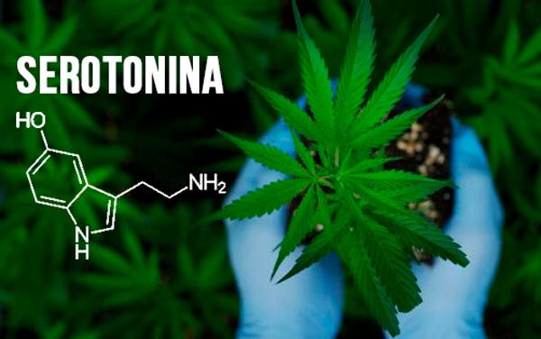 marihuana migraña