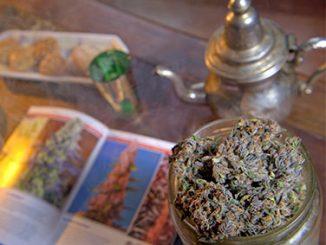 Infusion de cannabis